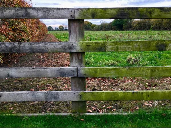 Di-Ard Algae Fence Treatment