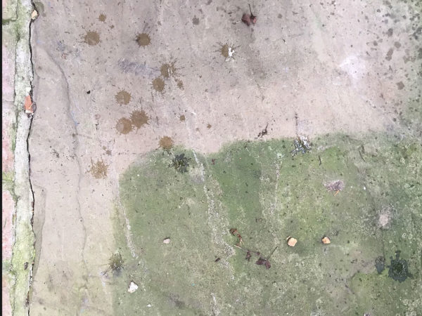 Di-ard Algae Treatment for paving slabs, paths, brick set drives, concrete, tarmac, sandstone pavers, yorkshire stone flags, indian sand stone